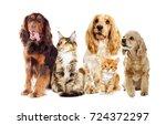 dog and kitten on a white... | Shutterstock . vector #724372297