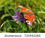 european peacock  aglais io ... | Shutterstock . vector #724542283