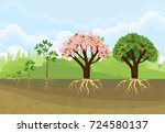 sequential stages of tree... | Shutterstock .eps vector #724580137