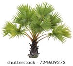 young betel palm on isolate...   Shutterstock . vector #724609273