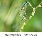 Ovipositing Dragonflies