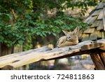 The Fennec Fox Sleep On The...