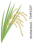 spike of rice  oryza sativa ... | Shutterstock .eps vector #72491527