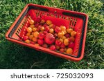 yellow and red farmer tomatoes... | Shutterstock . vector #725032093