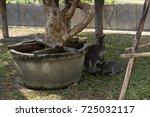 kangaroo breast feeding baby... | Shutterstock . vector #725032117