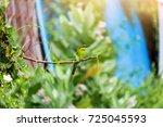colorful bird  bay headed bee...   Shutterstock . vector #725045593
