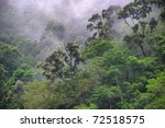 rainforest canopy at the barron ... | Shutterstock . vector #72518575