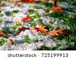 Fall Leaves In Snow On Grass I...
