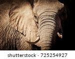 wild african elephant close up  ... | Shutterstock . vector #725254927