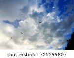 Birds Flying In Golden Hour...