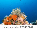 feather stars | Shutterstock . vector #725332747