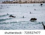 group of dolphins  swimming in... | Shutterstock . vector #725527477