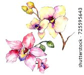 Stock photo wildflower orchid flower in a watercolor style isolated full name of the plant colorful orchid 725595643