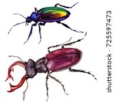exotic beetle wild insect in a... | Shutterstock . vector #725597473
