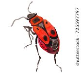 exotic beetle wild insect in a... | Shutterstock . vector #725597797