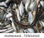 fresh fish from local fisheries ... | Shutterstock . vector #725616163