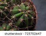 Cactus Thorns Close Up. Macro...