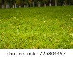close up photo of a green grass ...   Shutterstock . vector #725804497