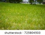 close up photo of a green grass ...   Shutterstock . vector #725804503
