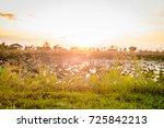 evening atmosphere | Shutterstock . vector #725842213