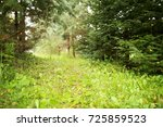 into the forest. nature... | Shutterstock . vector #725859523