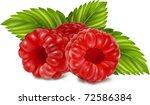 vector illustration of ripe... | Shutterstock .eps vector #72586384