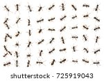 set of black ants isolated on...   Shutterstock . vector #725919043