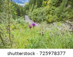 Small photo of Close-Up to Alpine Thistle at Oberstdorf / Bavaria
