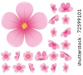 Cherry Blossom  Flowers Of...
