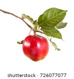 ripe apple on a branch with... | Shutterstock . vector #726077077
