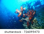 ascidia purple underwater photo ... | Shutterstock . vector #726095473