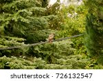 eagle sitting on the cables  in ... | Shutterstock . vector #726132547