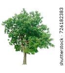 tree isolated on white... | Shutterstock . vector #726182383