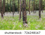 landscape of blooming blossom... | Shutterstock . vector #726248167
