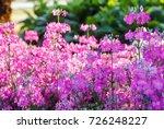 beautiful blooming flower in... | Shutterstock . vector #726248227