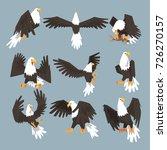 bald eagle an image set hunting ... | Shutterstock .eps vector #726270157