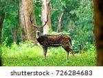 spotted deer in wayanad kerala... | Shutterstock . vector #726284683