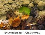 fallen leaves in transparent... | Shutterstock . vector #726399967