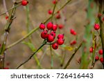 red berries with blurred... | Shutterstock . vector #726416443