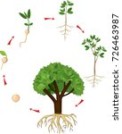 life cycle of tree. plant... | Shutterstock .eps vector #726463987