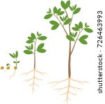 sequential stages of growth of... | Shutterstock .eps vector #726463993