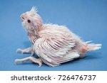 One  Parakeet Baby
