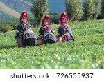 akha women thailand pick tea...   Shutterstock . vector #726555937
