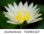 macro shot of a lotus flower .   Shutterstock . vector #726581167