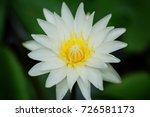 macro shot of a lotus flower .   Shutterstock . vector #726581173