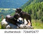 Labrador Retriever Black Dogs...