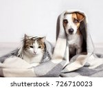 Stock photo dog and cat under a plaid pet warms under a blanket in cold autumn weather 726710023