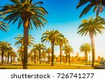 palm trees in a tropical resort ... | Shutterstock . vector #726741277