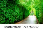 Trees Tunnel And The Walk Way....