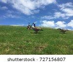 ducks in a garden farm life | Shutterstock . vector #727156807